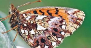 farfalla-veneto