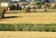 terreno-agricolo-new
