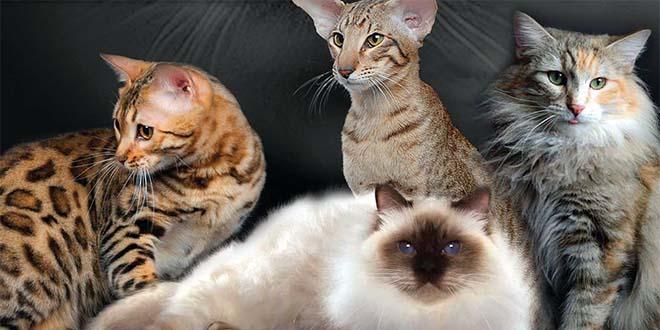 """Fiera di Vicenza, sono i giorni del """"Golden cat show"""""""