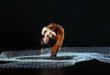 Pixel chiude la stagione di danza al Comunale di Vicenza