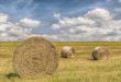 campo-fieno-agricoltura-stock