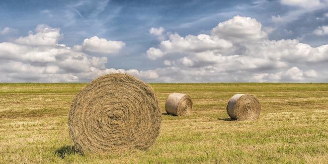 """Agricoltura, Berlato: """"Serve meno burocrazia"""""""