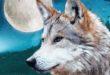 Malo incontra i lupi con il libro di Giuseppe Festa