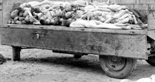 Corpi rinvenuti nel campo di concentramento di Buchenwald