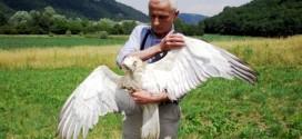 Alberto Fagan con il bellissimo rapace che ha curato e che oggi ha restituito alla natura