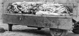 Un camion carico di corpi di prigionieri dei nazisti, nel campo di concentramento di Buchenwald a Weimar, in Germania