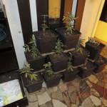 Alcune delle piante trovate in casa