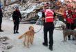 terremoto-soccorsi-cinofili