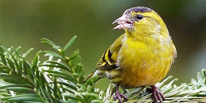 Calendario Mostre Ornitologiche 2019 Sicilia.Thiene Migliaia Di Canarini Alla Mostra Contatto Natura