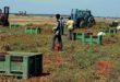 Un piano contro il caporalato in agricoltura