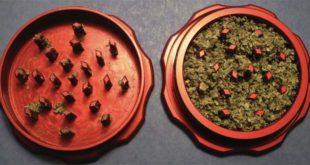 Un grinder, con della marijuana sminuzzata pronta da rollare - Foto di Pacet (CC BY-SA 3.0)