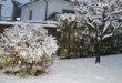 Neve in Veneto. E' il colpo di coda dell'inverno