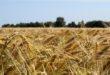 Elezioni, da Coldiretti un Manifesto per il cibo