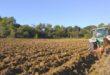 Agricoltura, patto Regione Coldiretti su stagionali