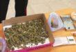 Marostica, marijuana in casa. Arrestato per spaccio