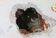 Gatto cade nella canna fumaria e lo adottano