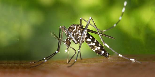 Vicenza, torna l'ordinanza anti zanzara tigre