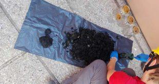 I nuovi ritrovamenti di rifiuti fatti oggi sull'argine del fiume Poscola