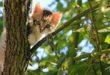 Gattino ucciso a calci, l'appello della Lav di Bassano