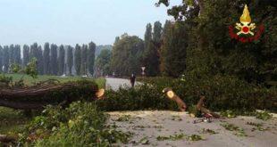 Monteviale, albero di 15 metri cade sulla strada