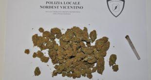 La marijuana sequestrata dalla polizia locale a Chiuppano