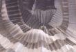 Schio, scienza per tutti con il Festival Altovicentino