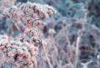 Meteo, neve e gelate in arrivo sul Veneto