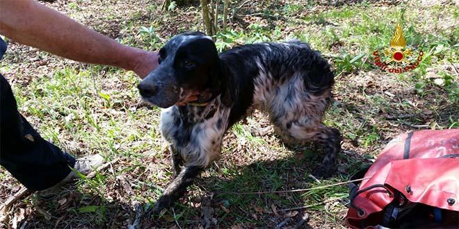 Cane cade in una voragine. Salvato dai vigili del fuoco