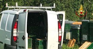 Arzignano, apicoltore muore lavorando alle arnie