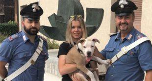Cane di razza rubato sull'auto in fuga. Tre denunciati