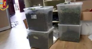 Malo, 10 kg marijuana in una serra. Tre arrestati