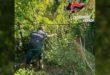 Coltivazione di marijuana scoperta a Vicenza