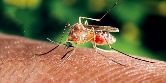 West Nile, primo caso del 2019 in Veneto