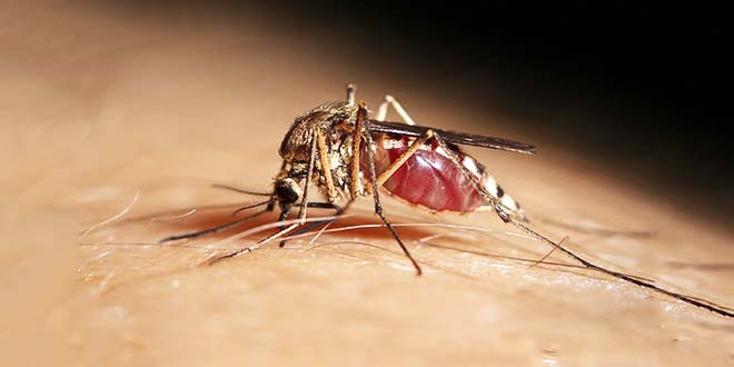 Dalla Regione una Faq sul virus West Nile