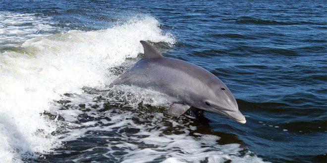 Alto Adriatico mare protetto? No dalla Regione