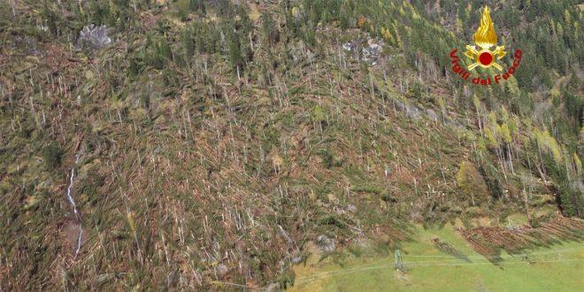 Oltre un milione di alberi è stato abbattuto dal vento nell'ondata di maltempo che ha colpito il Veneto