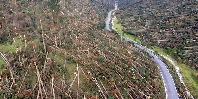 """Emergenza boschi, il Pd: """"Consiglio regionale straordinario"""""""