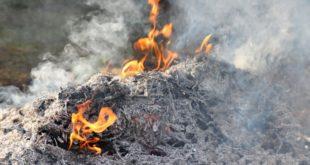 Tra le altre disposizioni, l'ordinanza anti inquinamento vieta di bruciare le ramaglie