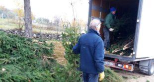 Un centinaio gli abeti dell'Altopiano proposti al mercato di Campagna Amica come alberi di Natale
