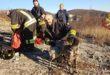 Cane da caccia salvato dai vigili del fuoco