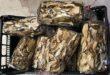 Funghi cinesi venduti come prodotti locali