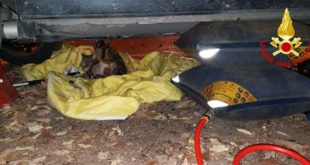 Gatto in difficoltà salvato dai vigili del fuoco