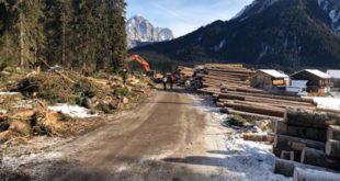 Boschi abbattuti in Veneto, si recuperano i tronchi