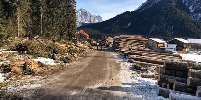 Un accordo per il legname delle foreste danneggiate