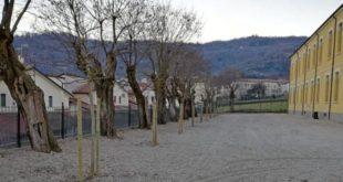 Tra i lavori eseguiti a Montorso, anche la sostituzione di piante malate con nuovi alberi