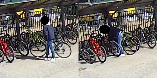 Alcuni fotogrammi che immortalano il furto delle biciclette