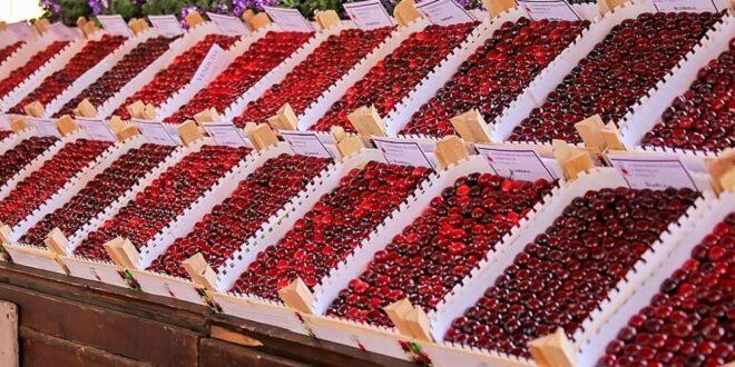 Marostica si contano i giorni per la raccolta delle ciliegie