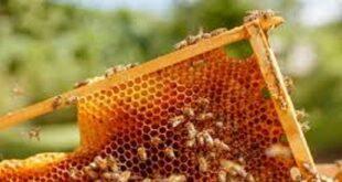 Adottiamo le api Recoaro amico delle api