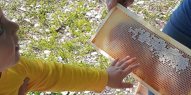 domenica delle api