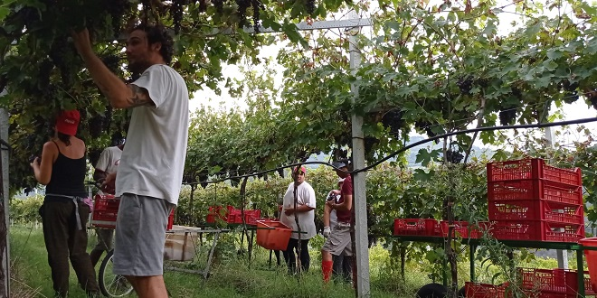 Confagricoltura Vicenza vendemmia 2020